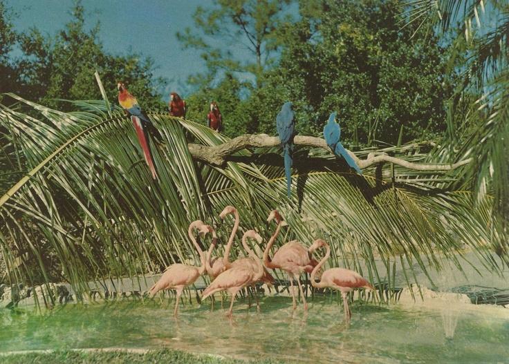 Vintage Travel Postcards: Parrot Jungle