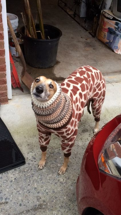This giraffe dog. | 29 Dogs You Won't Believe Actually Exist | See more about giraffes and dogs...HAHAHAHAH:):)