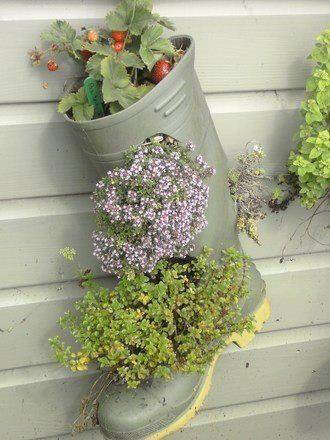 Plantjes in een laars recycling