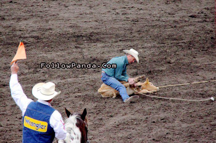 Tie Down Roping at Teepee Creek Stampede Rodeo Event - County of Grande Prairie, Alberta, Canada | FollowPanda.Com
