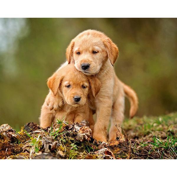 Two Puppies Diy Diamond Painting Dogs Golden Retriever Dog