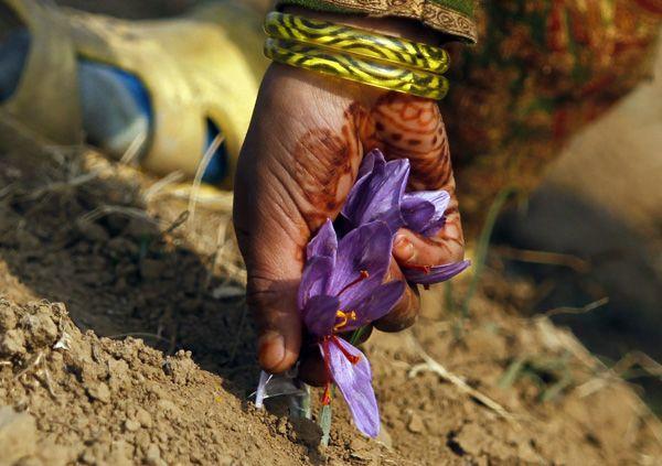 http://blogs.reuters.com/photographers-blog/2012/11/13/among-the-fields-of-saffron/  Fayaz Kabli
