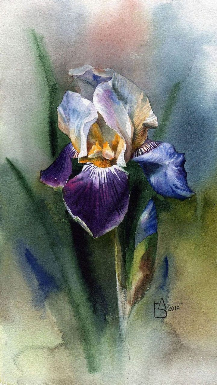 Purple Iris Watercolor Giclee Print Fine Art Home Decor 12x24