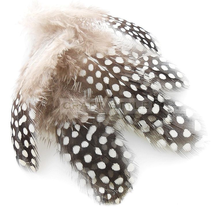 perliczka perlica pióra 10 szt NATURALNE