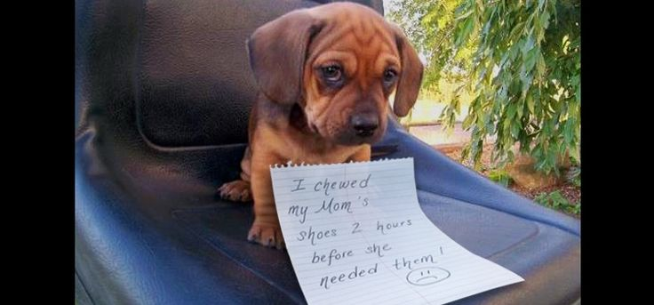 These 19 Dog Shaming Photos Will Make You Giggle!