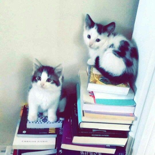 Studious kittens | Cats. | Pinterest | Kittens