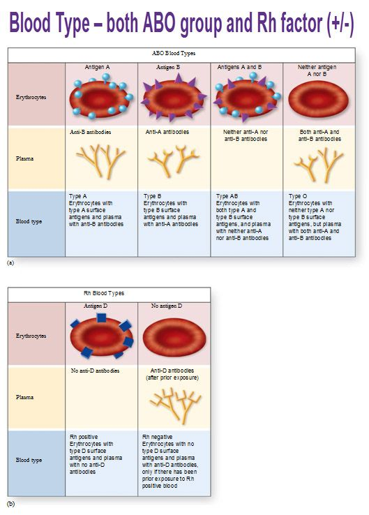 ABO blood typing & Rh factor.  Proteins, plasma, antigens.