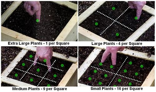 Simply use your fingers to draw lines in the soil as per the diagrams below and then poke holes in the middle of each block to plant your seeds.
