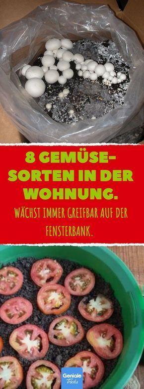 8 Gemüse- Sorten in der Wohnung #Gemüse #Wohnung…