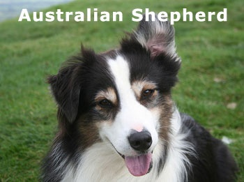 "Australian Dog Names - A list of interesting Australian dog names from the land ""down under"""