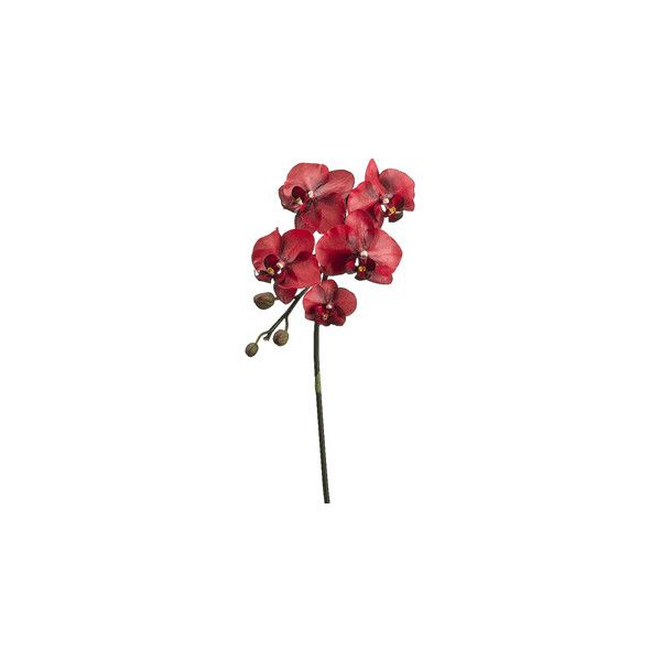"""33"""" Phalaenopsis Orchid Spray in Red 