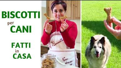 BISCOTTI PER CANI FATTI IN CASA DA BENEDETTA – Homemade Dog Treats