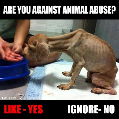 against animal abuse persuasive essay