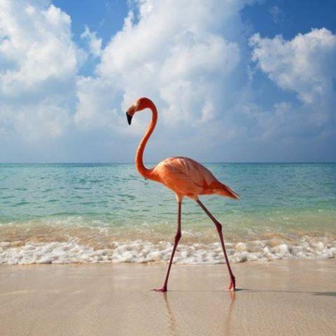 ☀️Курорты Азии, куда стоит поехать этой зимой💗 ☀️#Бали Сказочный, фантастический, сумасшедший до неприличия — все это про один только остров. Здесь — идеальное место для всего. ☀️#Гоа Гоа, который некоторые по незнанию считают островом, — это бывшая португальская колония на побережье западной Индии. Здесь не такой уж белый песок, не слишком прозрачное море, а цветные рифы и вовсе отсутствуют. ☀️#Шри‑Ланка Остров Шри‑Ланка больше известен у нас как Цейлон. Все благодаря ароматному…