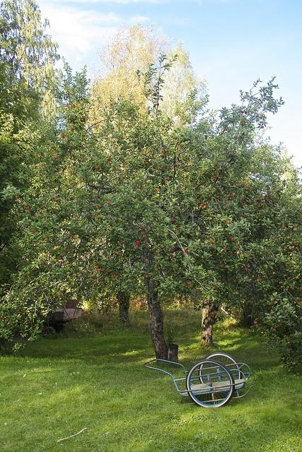 Apple tree autumn by Damork, via Flickr