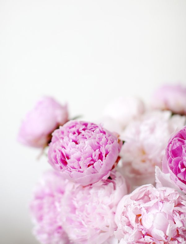 Peonies Season best 20+ peonies season ideas on pinterest | peony, flowers and