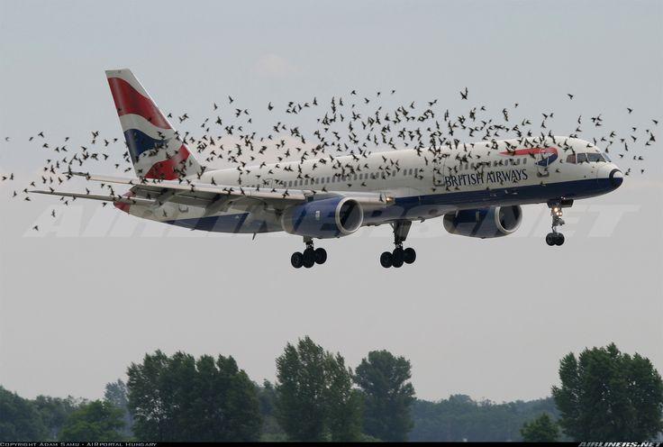 An infested landing