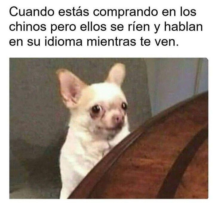 Risa Meme Memes Espanol Animal Memes Funny Pictures Funny Memes
