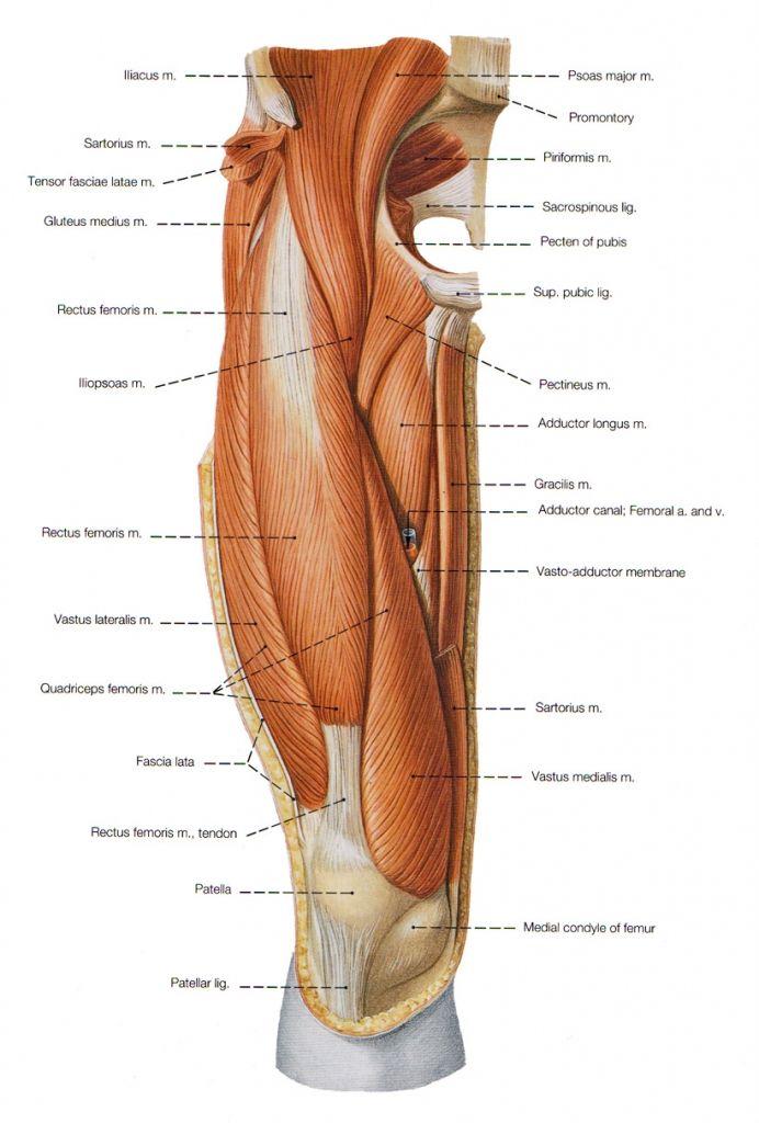 Mejores 13 Im U00e1genes De Anatomy En Pinterest