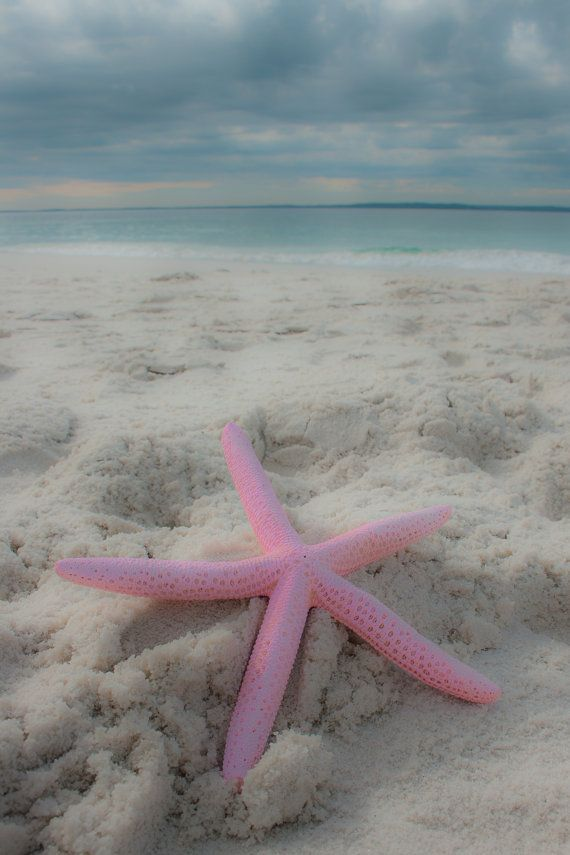 Beach Photography, Coastal photography, Beach print, Starfish print, Landscape photography, Seascape, Beach house decor, Pink & Blue via Etsy