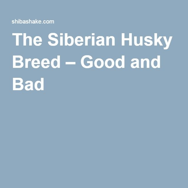 The Siberian Husky Breed – Good and Bad