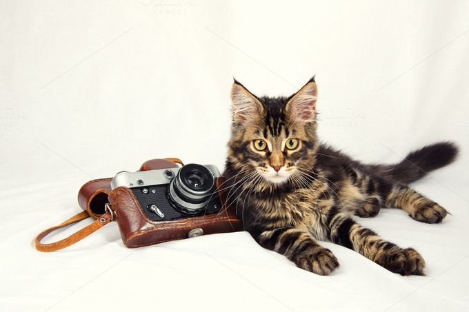 Maine Coon. Check out Kitten and camera by NikSorl on Creative Market