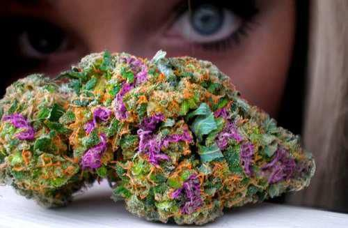 Fruity Pebble Kush <3!