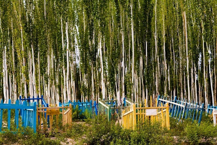 """Unrevealed, Site 4 (Colored """"Cribs""""), 2009. Painted burial markers are protected by a stand of poplar trees."""