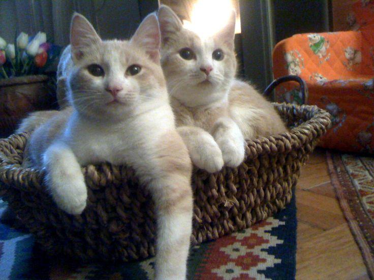 Omar e Oscar