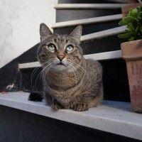 #dogalize Sgridare i gatti non serve a nulla: meglio il rinforzo positivo #dogs #cats #pets