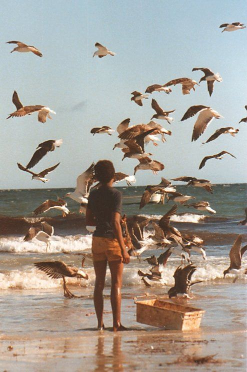 Somalia Gulls  Mogadishu beach, 1979.  Ph: David Bridgen
