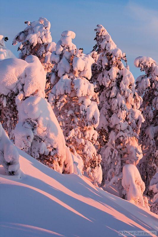Finland, Kuusamo.     Winter Landscapes from Lapland Gallery II