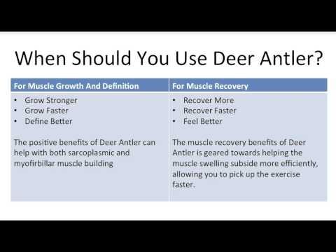 Deer Antler Velvet Reviews - Should You Use Deer Antler Velvet? Review - YouTube #deer_antler_velvet
