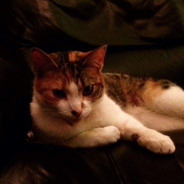 Bonnie our friendly cat