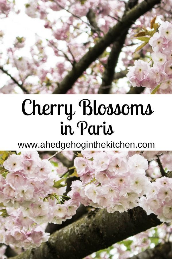 Cherry Blossoms At Parc De Sceaux 1 Hour From Paris A Hedgehog In The Kitchen Day Trip From Paris Holidays In Europe Paris