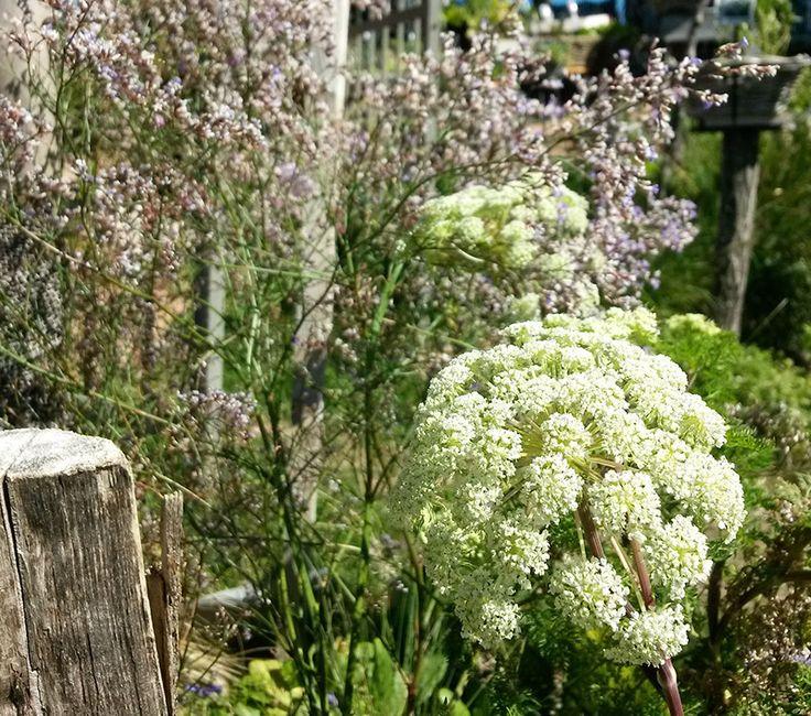 """jardin plantes vivaces-""""Les Jardins des Hurlevents """" http://www.plantes-vivaces-hurlevents.com/"""