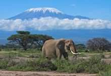 12 Day Best of East Africa Safari. This safari spectacle show cases the best highlights of Kenya and northern Tanzania. The safari works on a scheduled departure basis, and starts and ends in Nairobi. This safari takes guests on a journey through East Africa exploring enroute; lakes, villages where we meet local people, cities and most importantly some of the best National Parks and Games Reserve in Kenya and Tanzania ...a great safari for a first timer to Africa.