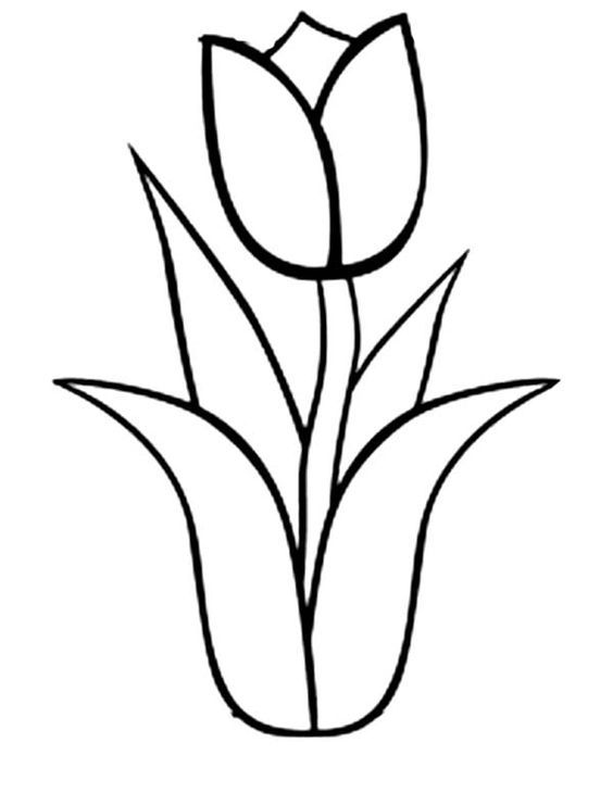 Tulips, : An Illustration of Single Double Bloom Tulip Coloring Page: