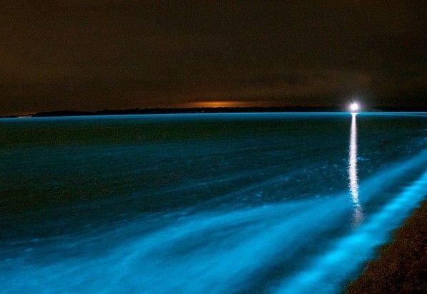 Lagoon that glows in my Island Puerto Rico!