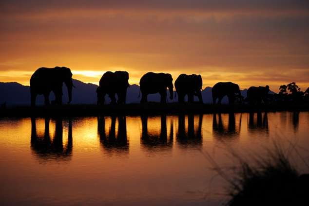 Knysna Elephant Park - Harkerville accommodation. Harkerville Bush Lodges (Catered) (GAME NEARBY)