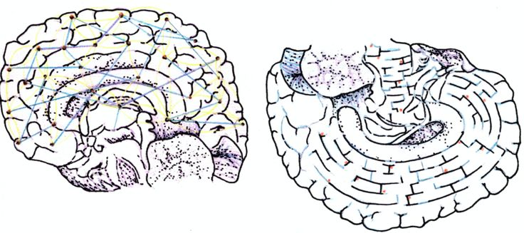 Free will and determinism | The McGill Daily  ||  What neuroscience tells us about moral responsibility https://www.mcgilldaily.com/2017/11/free-will-and-determinism/?utm_campaign=crowdfire&utm_content=crowdfire&utm_medium=social&utm_source=pinterest