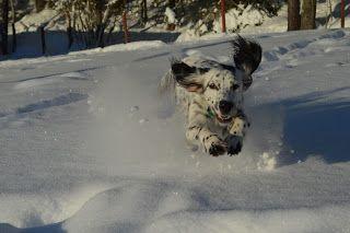 Gårdstunet Hundepensjonat: Nydelig dag - nydelig vær og nydelige hunder i all...