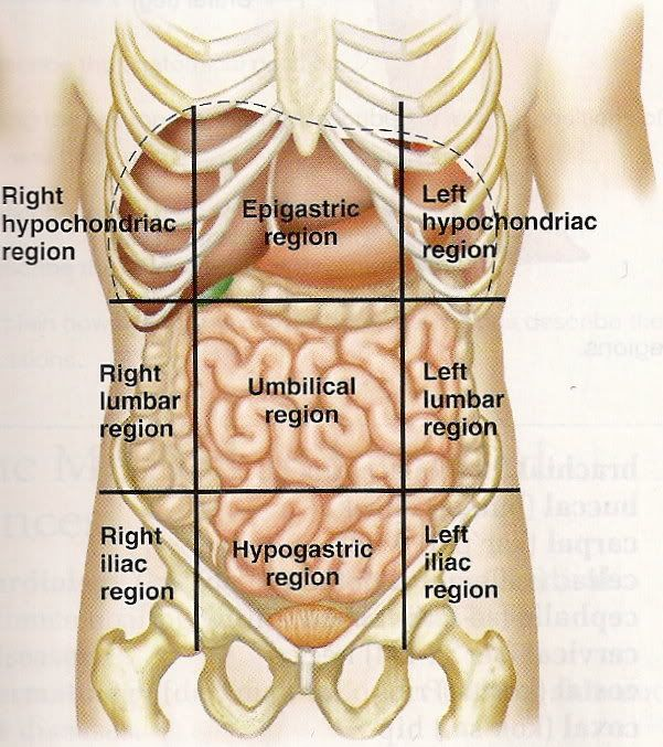 13 best anatomy images on pinterest | anatomy, human anatomy and, Human Body