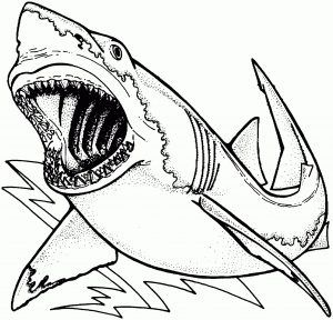Shark Coloring Pages For Kids Shark Coloring Pages Super