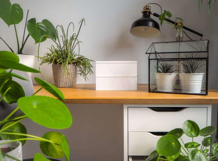 Pflanzen Büro