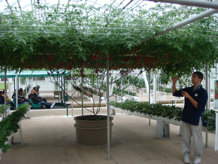 133 best images about hydroponic vegetables on pinterest for Hydro gardens