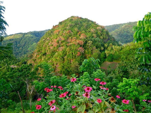 images of pulong   Here is what I got from Wikipedia about Mount Pulong Bato!