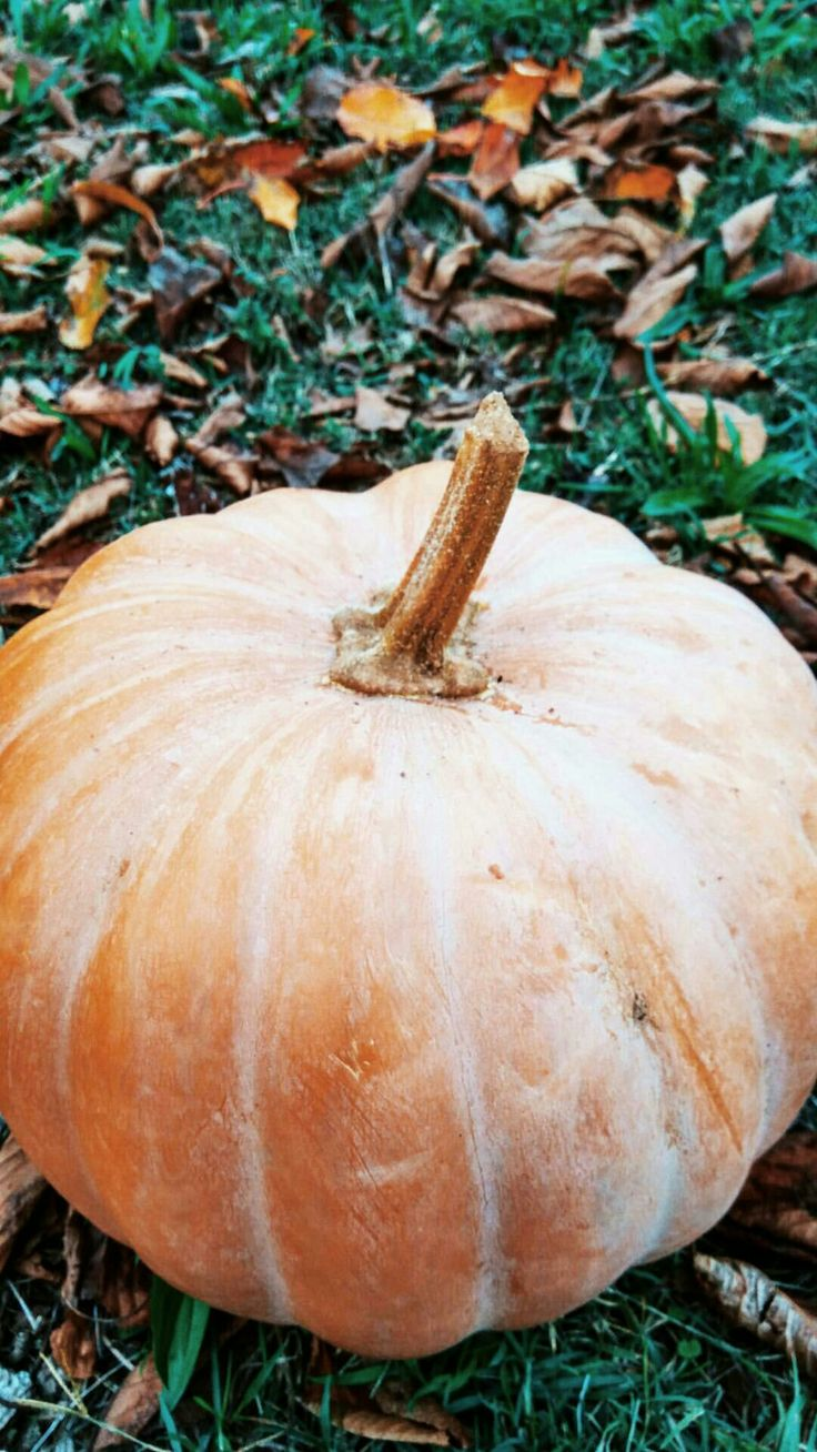 #pumpkin #autumn #fall