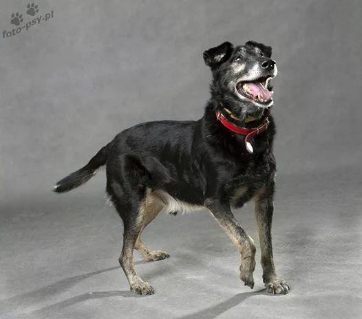 Cukierek, najsłodszy pies na świecie! Mieszka w schronisku, szukamy mu domu