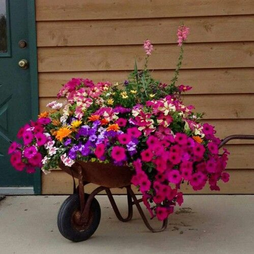 Great idea, use an old wheelbarrow to plant beautiful flowers in. Love this. From Homemaking Tips on Facebook.